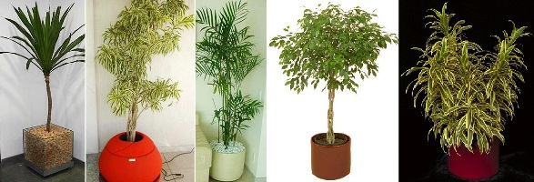 Plantas de interior tattoo design bild for Plantas de interior resistentes