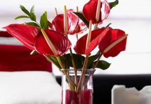 Vaso com flores vermelhas